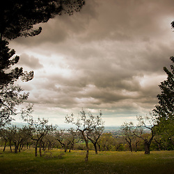 Lisa Johnston | lisajohnston@archstl.org Olive trees line the hillside in Assisi.  This grove surrounds the Church of San Damiano which is the original monastery of the Poor Clare nuns.