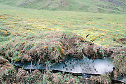 Alaska. Permafrost in the Arctic. 1989
