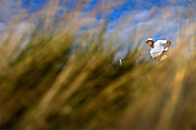 Tony Finau watches his tee shot on the ninth hole during the first round of The Barclays Championship held at Plainfield Country Club in Edison on August 27.
