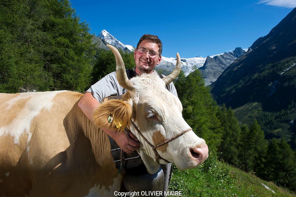 Nicolas Gaudin, agriculteur à La Forclaz, près d'Evolène dans son étable aux alpages au dessus du village le 11 aout 2011. Dans quelques années, comme la moitié des exploitants suisses, il renoncera à l'estivage du bétail. Ce phénomène entraînera l'abandon de nombreux pâturages d'estivage qui deviendront des forêts. PAYSANS VALAIS SUISSE VACHE FROMAGE. (PHOTO-GENIC.CH/ OLIVIER MAIRE)