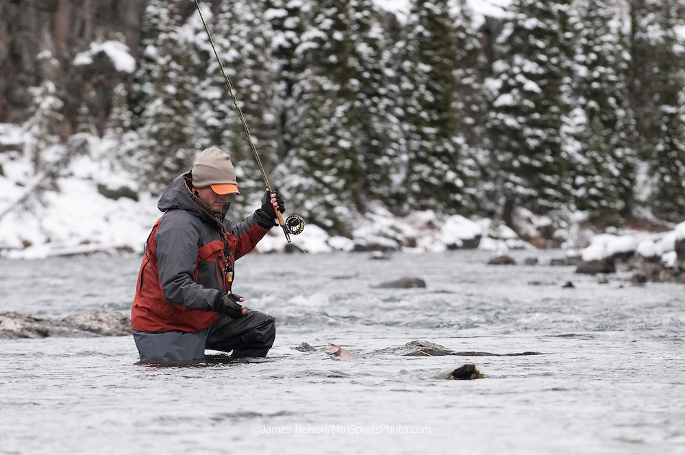 An angler brings a rainbow trout to hand while fly fishing in Box Canyon on the upper Henry's Fork (a.k.a., North Fork) of the Snake River, Idaho.