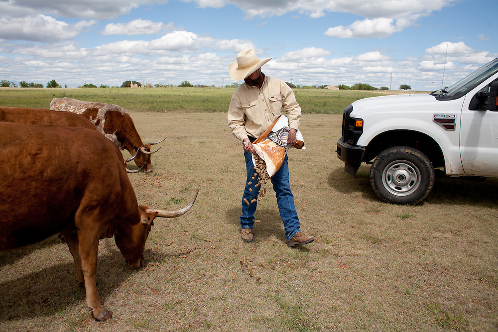 Will Cradduck, manager of the official Texas Longhorn herd, walks among the cattle during feeding time at Ft. Griffin.<br /> <br /> Goodnight and Loving herded Texas longhorns on the trail. &quot;As trail cattle their equal has never been known and never will be,&quot; said Goodnight of the breed. &quot;They can go farther without water and endure more suffering than others.&quot; Since 1948, Ft. Griffin has been home to the official Texas State Longhorn herd, retaining the genetic purity of the breed. The herd, now numbering over 250, roams the park and archaeological sites.