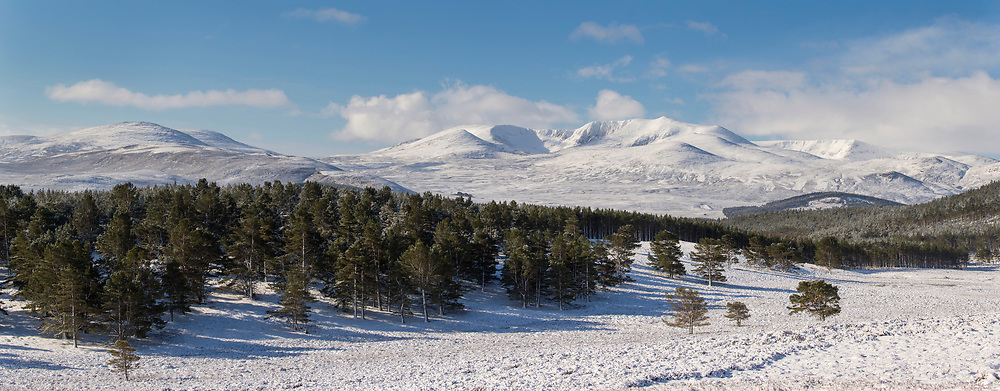 Lochnagar and pine forest in winter, Balmoral, Scotland