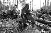 Clear cut logging in Oregon.