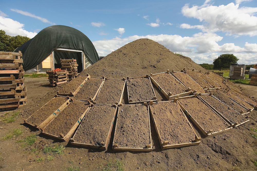 Tas de compost en attente de conditionnement..Les caissettes emplies de nouriture - fumier de porc a base de .sciure - permettent de recupere une grande partie des lombrics sur le compost
