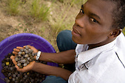Farm worker Thomas Kavi holds a handful of dry jatropha fruits after picking them from trees at the farm where he works in the town of Lolito, roughly 80km east of Ghana's capital Accra, on Thursday Dec. 12, 2006. Jatropha - which grows naturally in Ghana and other parts of Africa - can be used to make biodiesel.<br />