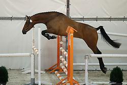 076, Hunanita<br /> Vrijspringen Nationale Merriekeuring, 3 jarige springmerries <br /> KWPN Paardendagen Ermelo 2015<br /> © Hippo Foto - Dirk Caremans