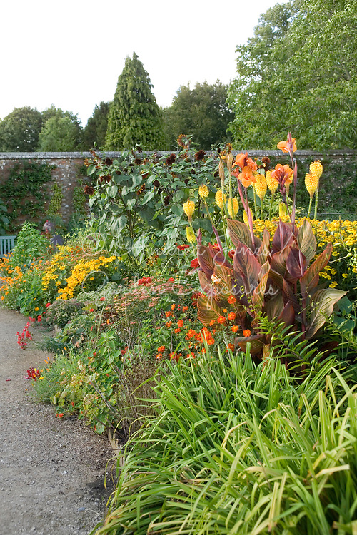 Hot colours border including Helianthus (sunflower), Canna, Kniphofia, Helenium, Achillea, Nasturtium, Geum, Lilium, Zinnia and Anthirrinum in the Vegetable Garden at West Dean Gardens, West Sussex, England