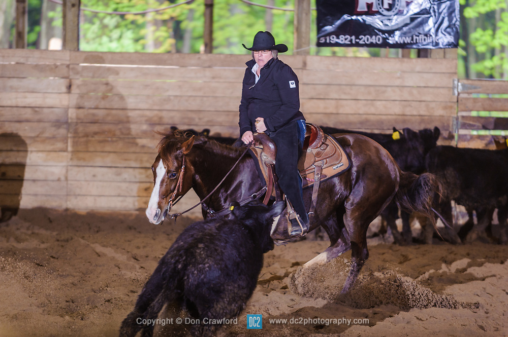 May 21, 2017 - Minshall Farm Cutting 4, held at Minshall Farms, Hillsburgh Ontario. The event was put on by the Ontario Cutting Horse Association. Riding in the 250 Novice Rider Class is Nancy Poole on MS Smart Freckles owned by Troy Donaldson.
