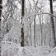 Heavy blanket of snow in Breakheart Reservation, Wakefield, MA