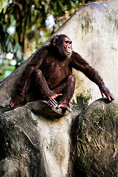 Monkey sitting on a rock.