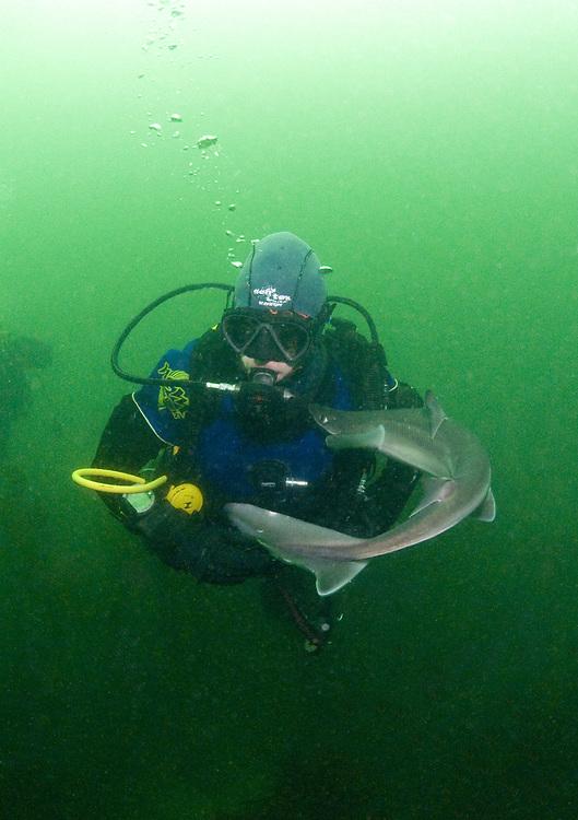 Diver with Spurdog (Squalus acanthias). Location : Stavanger, Norway