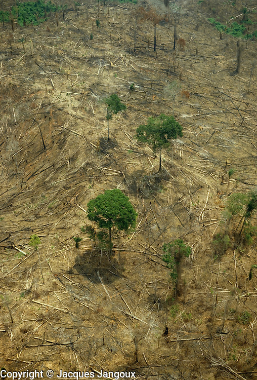 Aerial of remaining trees in area deforested for cattle ranching, Amazon rainforest, Brazil
