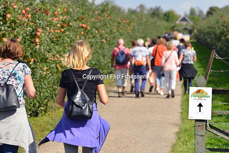 Nederland, Boven Leeuwen, 2-9-2017Bourgondisch fruitwandelen door de omgeving, een wandeltocht van 15 km die ook langs een boomgaard voert. De wandeltocht is onderdeel van de Dijkensport.Foto: Flip Franssen