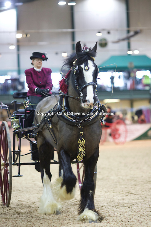 Shire Horse Society Spring Show 2017  Two-Wheeled Carts