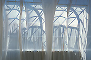 Arching shadows through a white curtain
