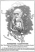 Charles Darwin (1809-1882) English naturalist. A pioneer of theory of Evolution by Natural Selection. From 'Punch', London, 11 December 1875