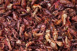 North America, Mexico, Oaxaca Province, Oaxaca, dried grasshoppers for sale in market