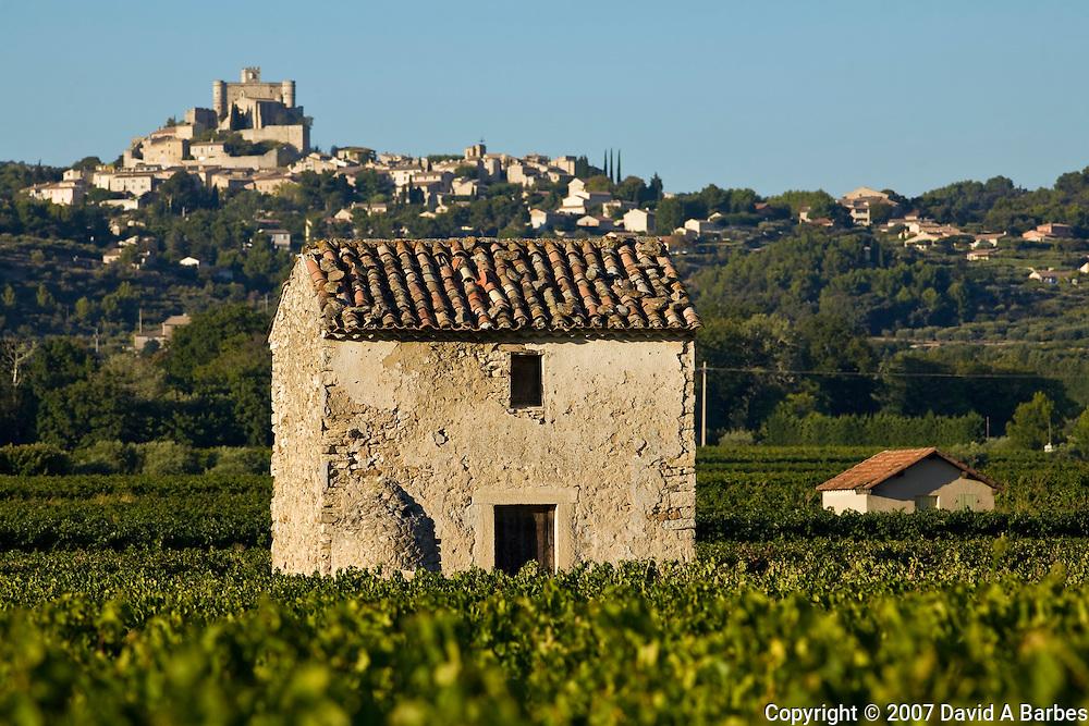 Vineyards of the Veniceient, le Barroux, Vaucluse, Provence, France