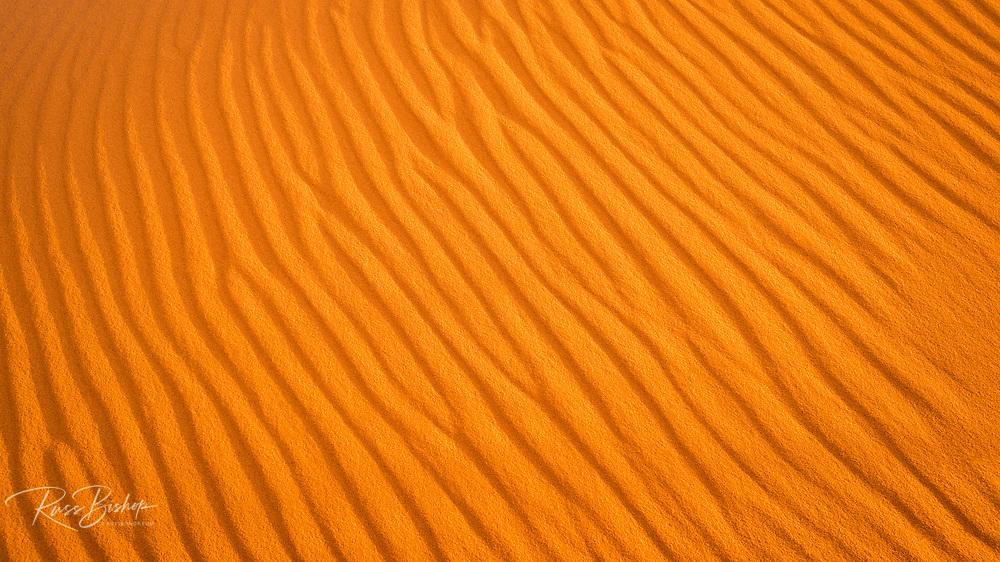 Sand dune detail, Coral Pink Sand Dunes State Park, Kane County, Utah USA