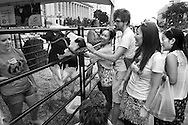 .Cows on the Concourse was held Saturday June 4, 2011 in Madison, Wisconsin.