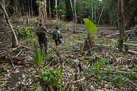 Edwin Scholes and local guide Jun walk through a freshly cleared field in the rain forest of Halmahera