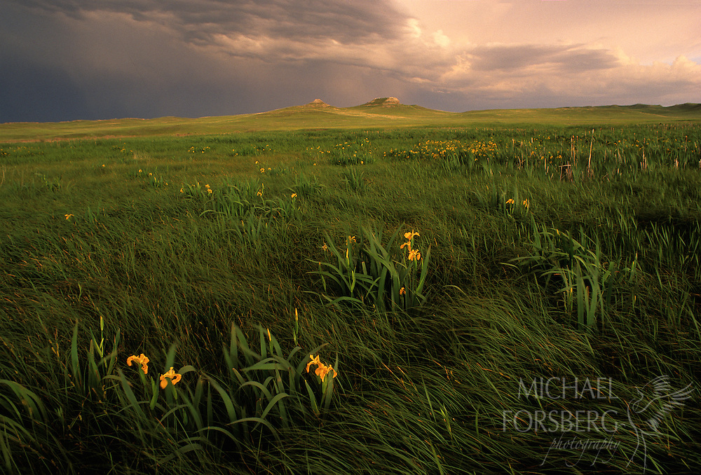 Clouds swirl in the sky over Agate Fossils Beds National monument, with wild iris dotting the landscape.  Nebraska Panhandle.