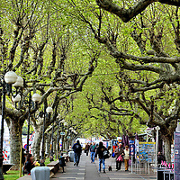 Tree-lined Promenade in Saint-Ràphaël, France<br />