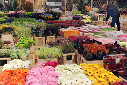 © Licensed to London News Pictures. 15/03/2012. London, UK. A man looks through flowers on a stall. The Mothering Sunday sales rush is on for flower growers, suppliers, florists and retailers amongst the Flowers at the New Covent Garden Flower Market on March 15th 2012 in London, England. New Covent Garden Flower Market is London's premier wholesale market stocking the widest range of flowers, plants and foliage in the UK. The run up to Mothers' Day is crucial in the flower selling calendar as Mothers' Day sales are condensed into about four days making the market very busy. Traditionally, Mothering Sunday was a day when children, mainly daughters, who had gone to work as domestic servants, were given a day off to visit their mother and family. Today, Mother's Day is a time when children give flowers and cards to their mothers, and generally pamper them..  Photo credit : Stephen SImpson/LNP