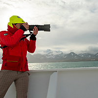 A man photographs wildlife from the bow of the National Geographic Orion while exploring in Royal Bay on the north coast of South Georgia Island.