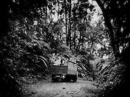 Brimstone porters catch a ride in the cold highland rains through a montane rainforest after collecting raw sulphur from the bowels of the Ijen Volcano.  The majority of porters earn roughly US$ 13 / day by a local refinery which pays by weight.  Java, Indonesia.