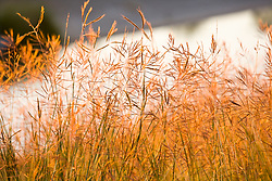 Golden light on the grass at Storey Park in Houston, Texas