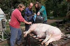 CZ Nedvezi Pig Slaughter II