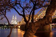 DEU, Germany, Cologne, tree at the banks of the river Rhine in the district Deutz, view to the cathedral and the Hohenzollern bridge.<br /> <br /> DEU, Deutschland, Koeln, Baum am Rheinufer in Deutz, Blick zum Dom und zur Hohenzollernbruecke.