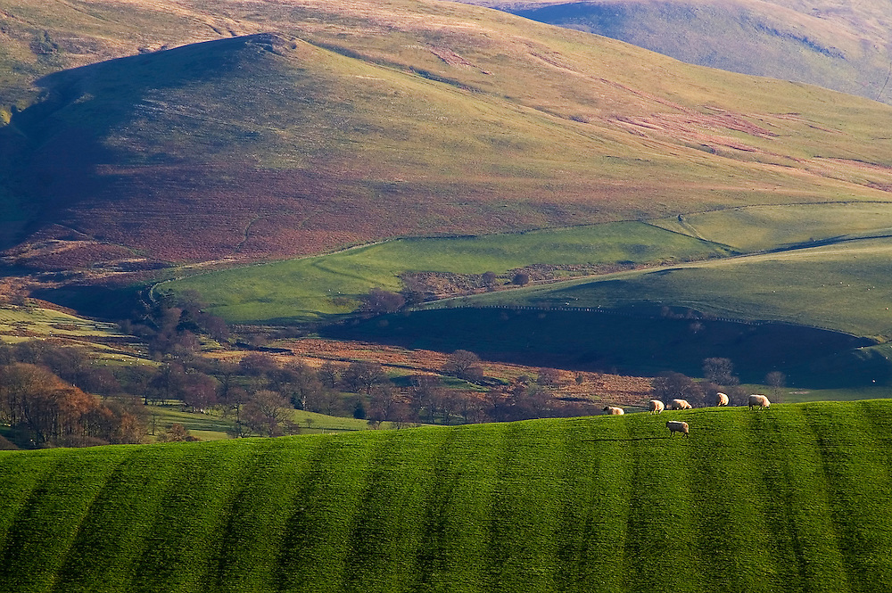 The low light captures beautifully the meadow and the sheep against the stunning backdrop of the Caldbeck Fells.