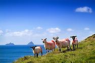 Photographer: Chris Hill, Valencia Island, County Kerry
