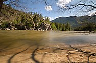 Trees along the beach at the Similkameen River in Bromley Rock Provincial Park, Princeton, British Columbia, Canada