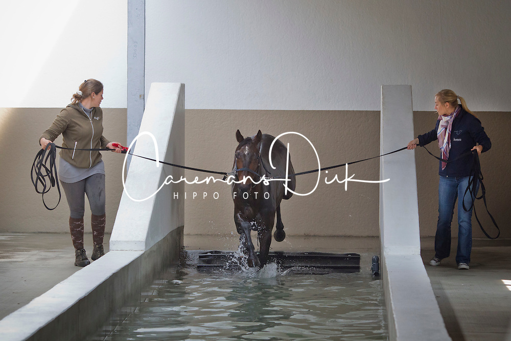 Health &amp; Trainingscenter Equiatros<br /> Scheldewindeke 2011<br /> &copy; Dirk Caremans