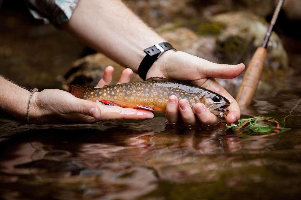 Holding a freshly caught Brook Trout into the Rapidan River.