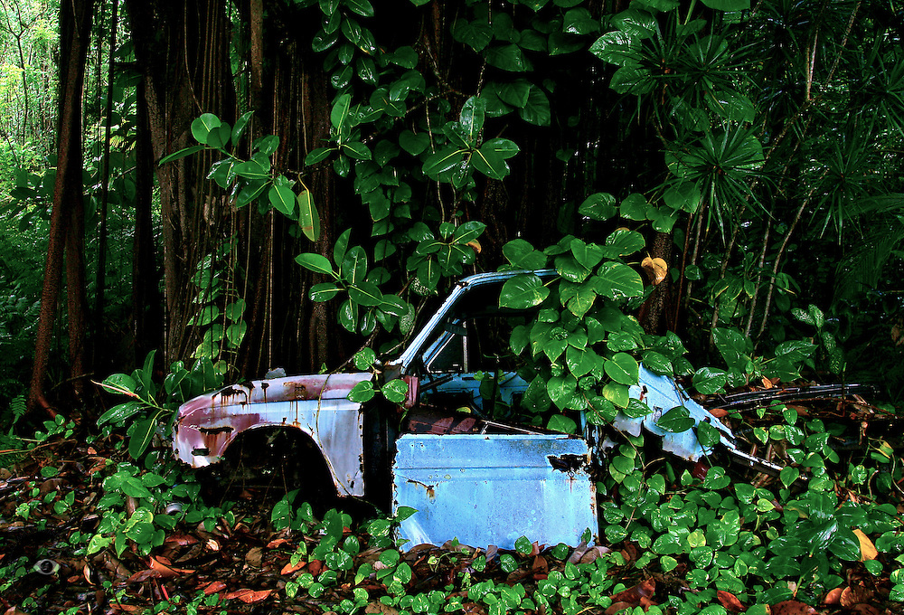 An abandoned truck is slowly engulfed by the jungle is has been left to decompose in. Many abandoned vehicles dot the Big Island of Hawaii's landscape like this one north of Hilo.