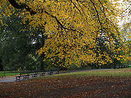 Autumn colors in Central Park