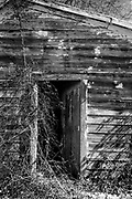 The door of this old shed contrasts nicely with the weathered wood siding.