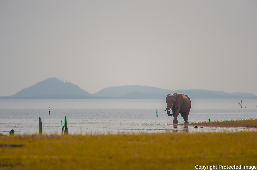 An elephant walks the shores of Lake Kariba in Zimbabwe's Matusadona National Park