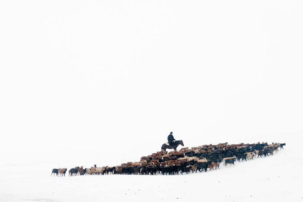 A man tends to his herd of goats in Bayan-Ölgii Province, the western-most province in Mongolia.