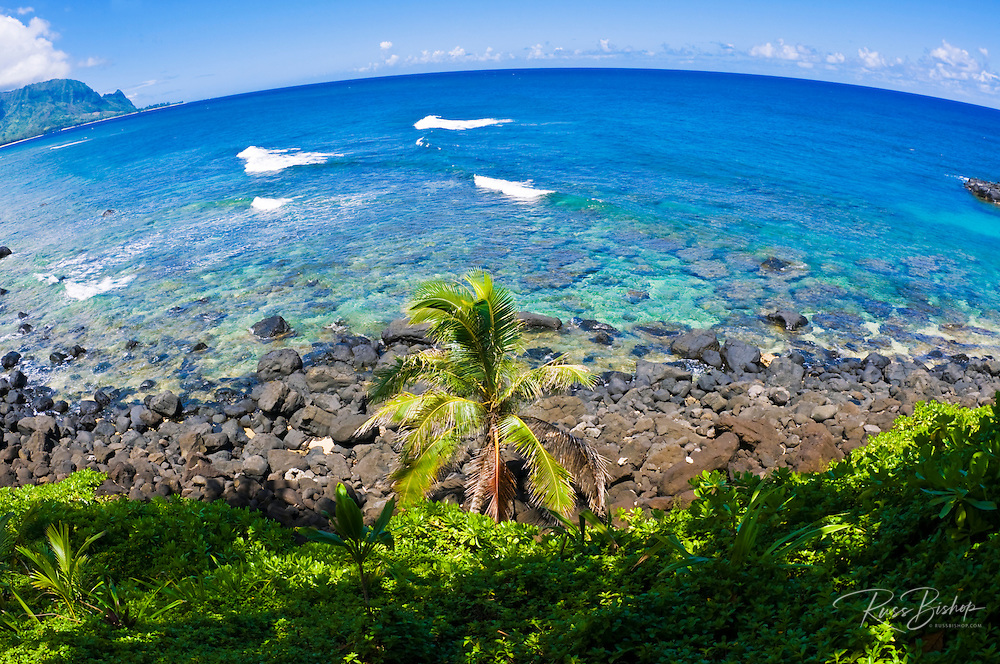 Coconut palm and blue Pacific waters at Hideaways Beach, Princeville, Island of Kauai, Hawaii