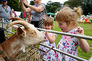 This was taken at the Norfolk Smallholders Training group annual show at Sheringham Park. I really like the girls expression and reaction to the goat in this picture. <br /> <br /> Picture: MARK BULLIMORE