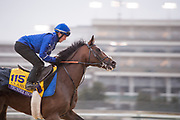 November 1-3, 2018: Breeders' Cup Horse Racing World Championships. Thunder Snow (IRE), trained by Saeed bin Suroor, exercises in preparation for the Breeders' Cup Classic