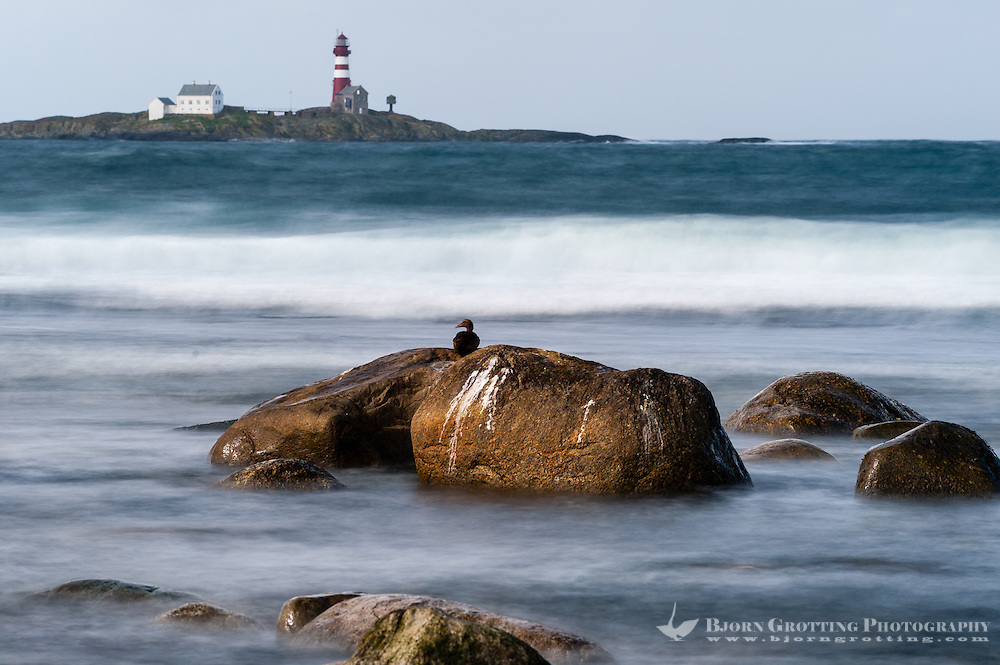 Norway, Sele. Feistein Lighthouse, Common Eider in the foreground. Long exposure.