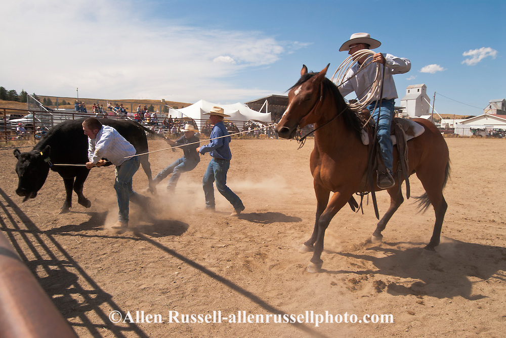 Wilsall Ranch Rodeo, Montana, Wild Cow Milking, David Fryer, Andy Kellom, Bill Wood, Sam Wood, North Fork Raiders Team..
