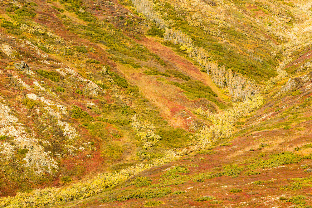 Autumn colors in Eureka Creek drainage near Kantishna in Denali National Park in Southcentral Alaska. Afternoon.